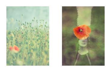 Poppy3